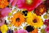 隐藏在花丛中的蜜蜂