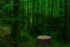 解救鳄鱼逃出森林
