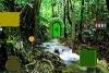 雨林深处逃脱