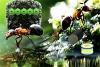 从蝗虫中拯救蚂蚁