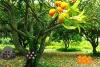 桔树农场逃生